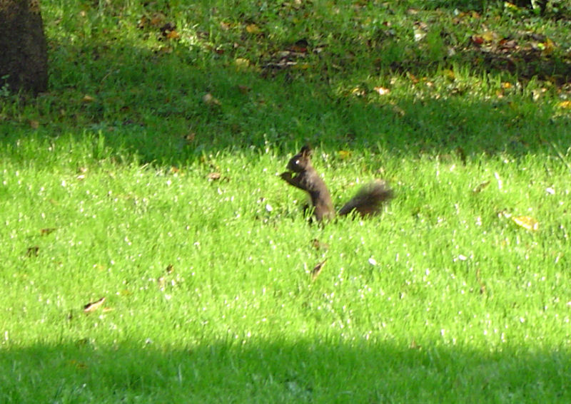 A squirrel in a garden next to the Fine Stay apartment