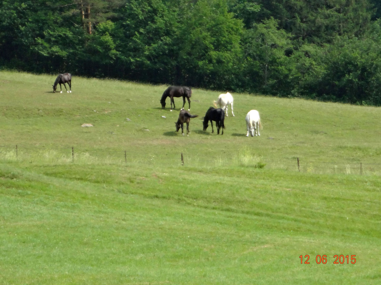 The zoomed in view of horses in the pasture from the second balcony.