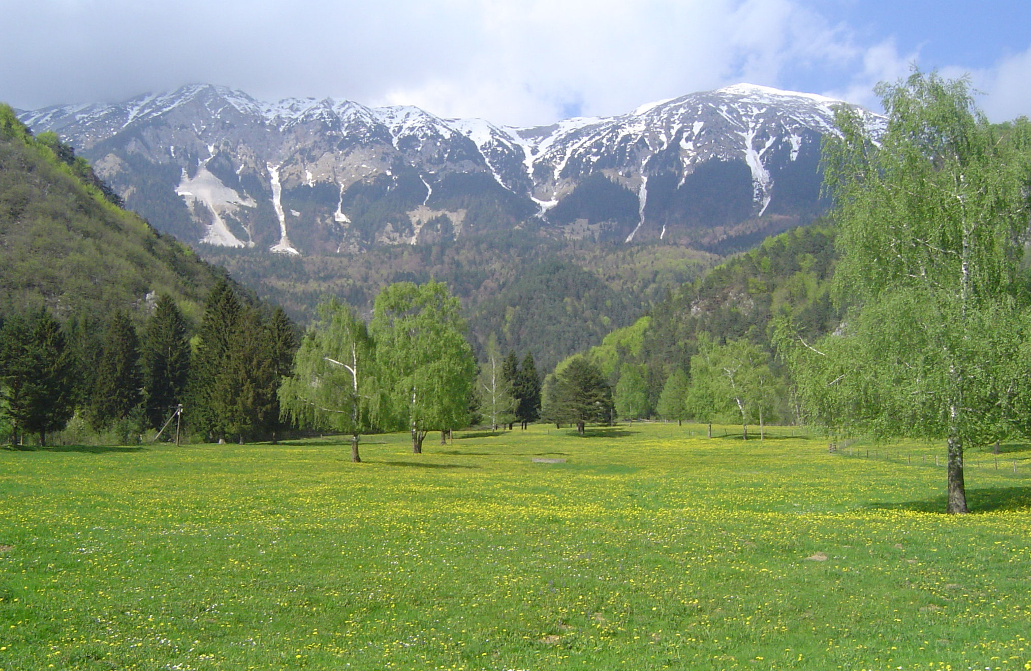 Meadows in the surroundings, Slovenian Alps
