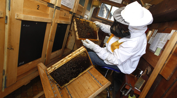 Slovenia beekeeping and Slovenian honey