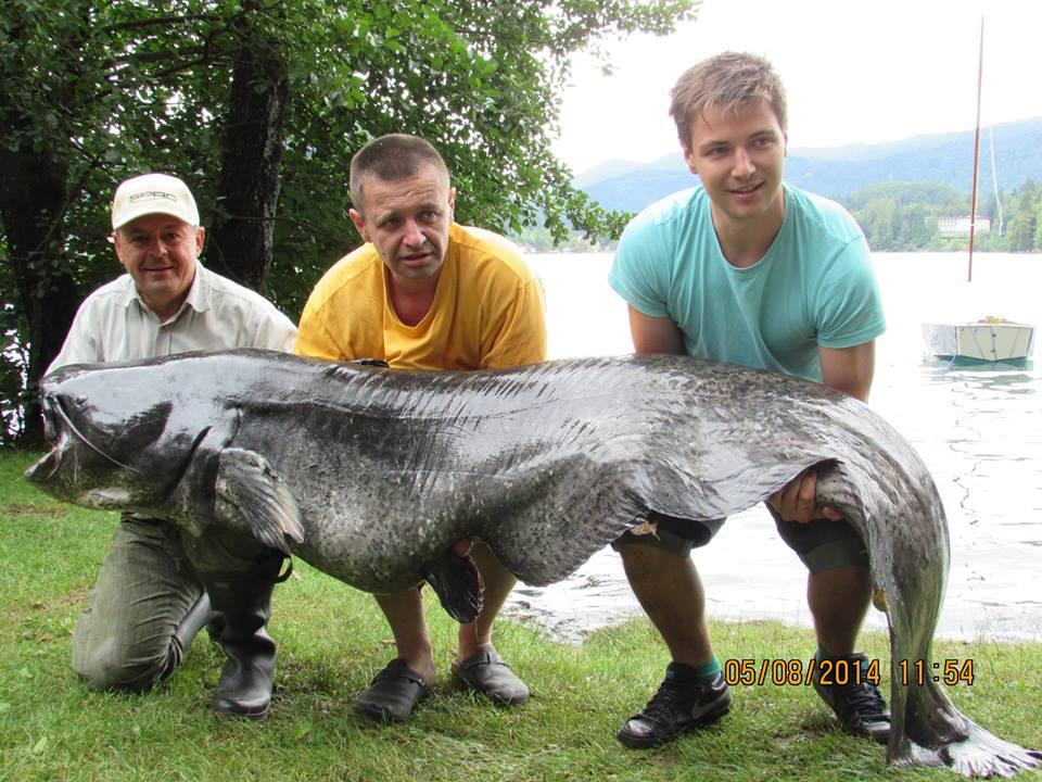 Lake Bled fishing