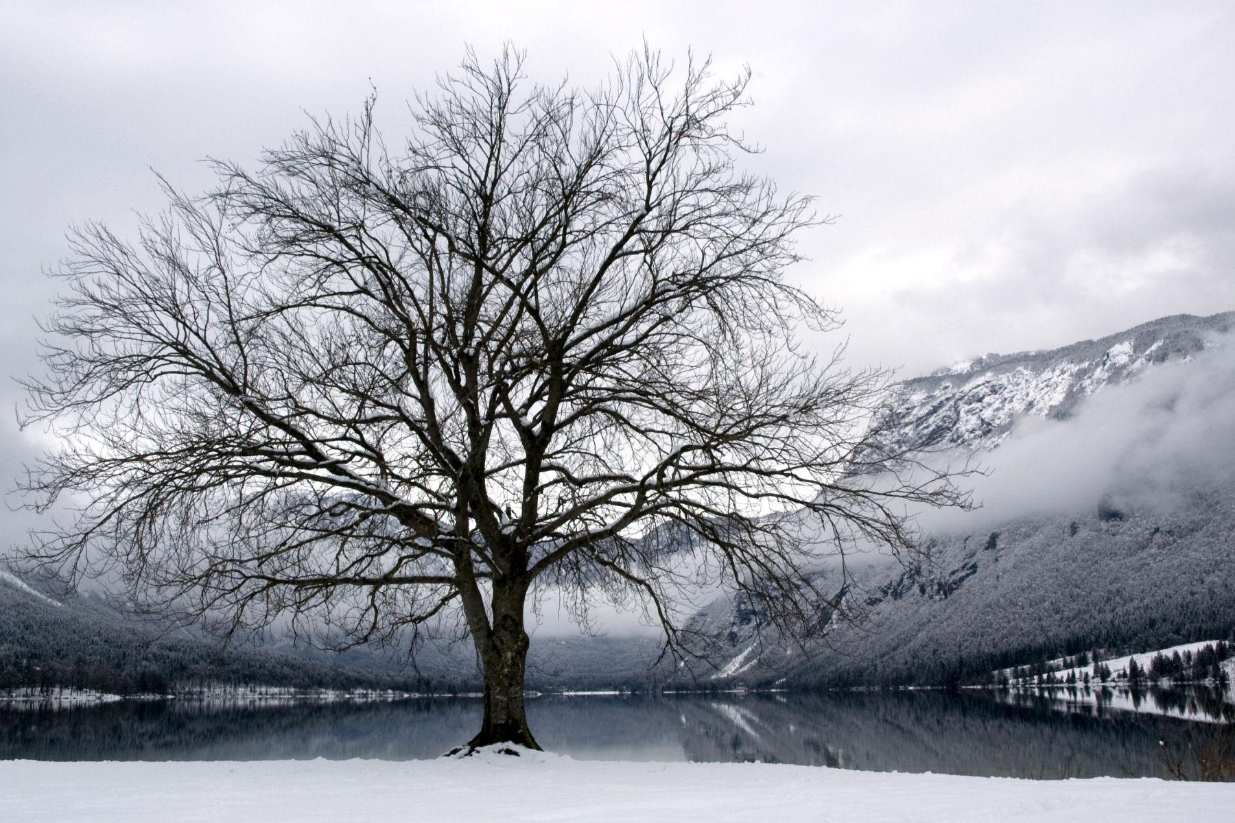 lake-bohinj-in-winter