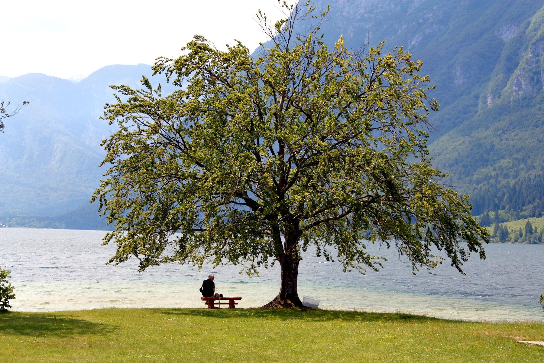 lake-bohinj-tree