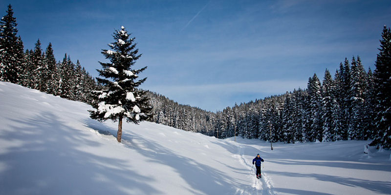 Pokljuka is a very popular cross-country skiing destination