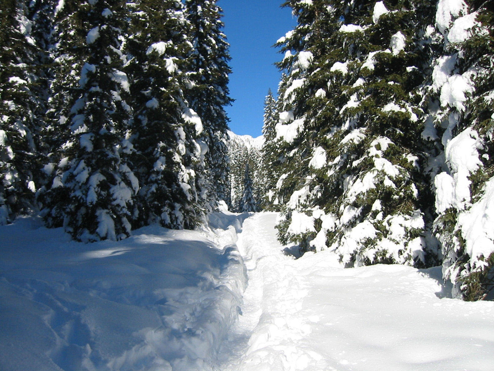 Pokljuka forest in winter, Slovenia