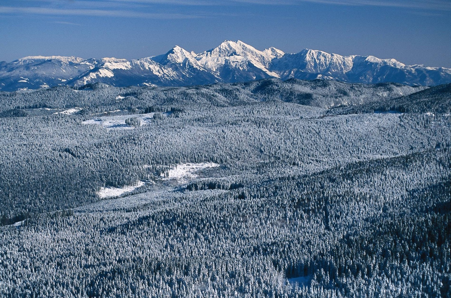 During winter the Pokljuka plateau turns into a very popular cross country skiing destination