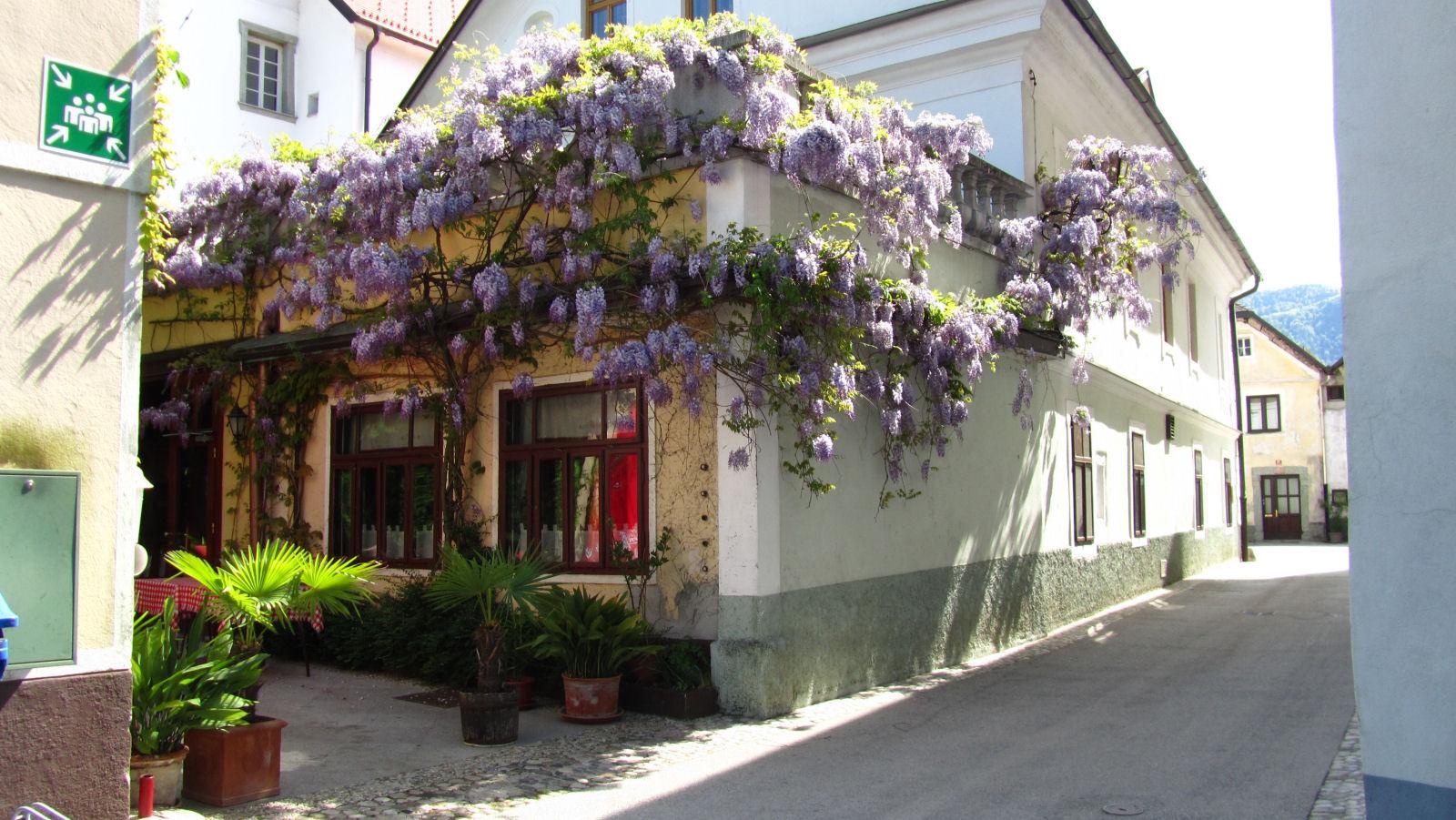 radovljica-medieval-old-town-8431