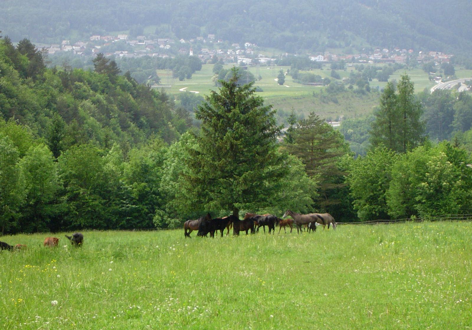 Apartma in pašniki na Gorenjskem v Sloveniji