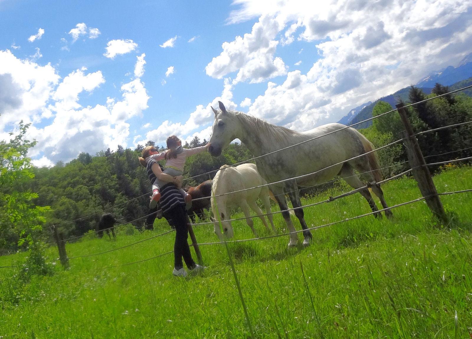 Narava, svež alpski zrak, pašniki in konji v okolici Fine Stay apartmaja na Gorenjskem