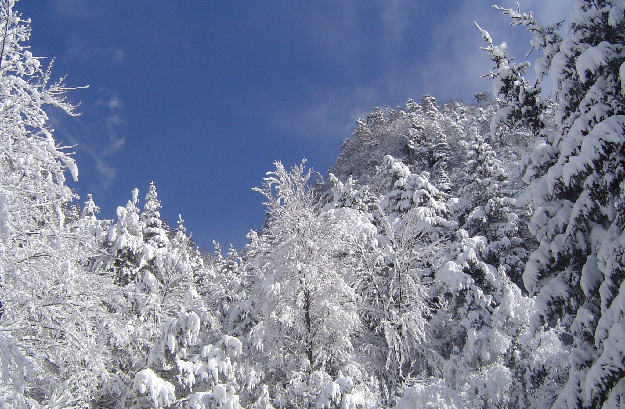 Slovenian Alps are white in winter with plenty of snow