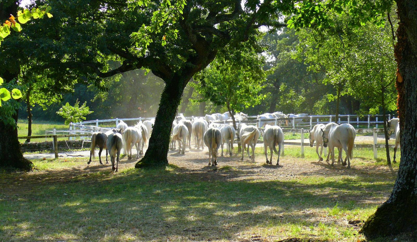 lipica-stud-farm-slovenia-summer