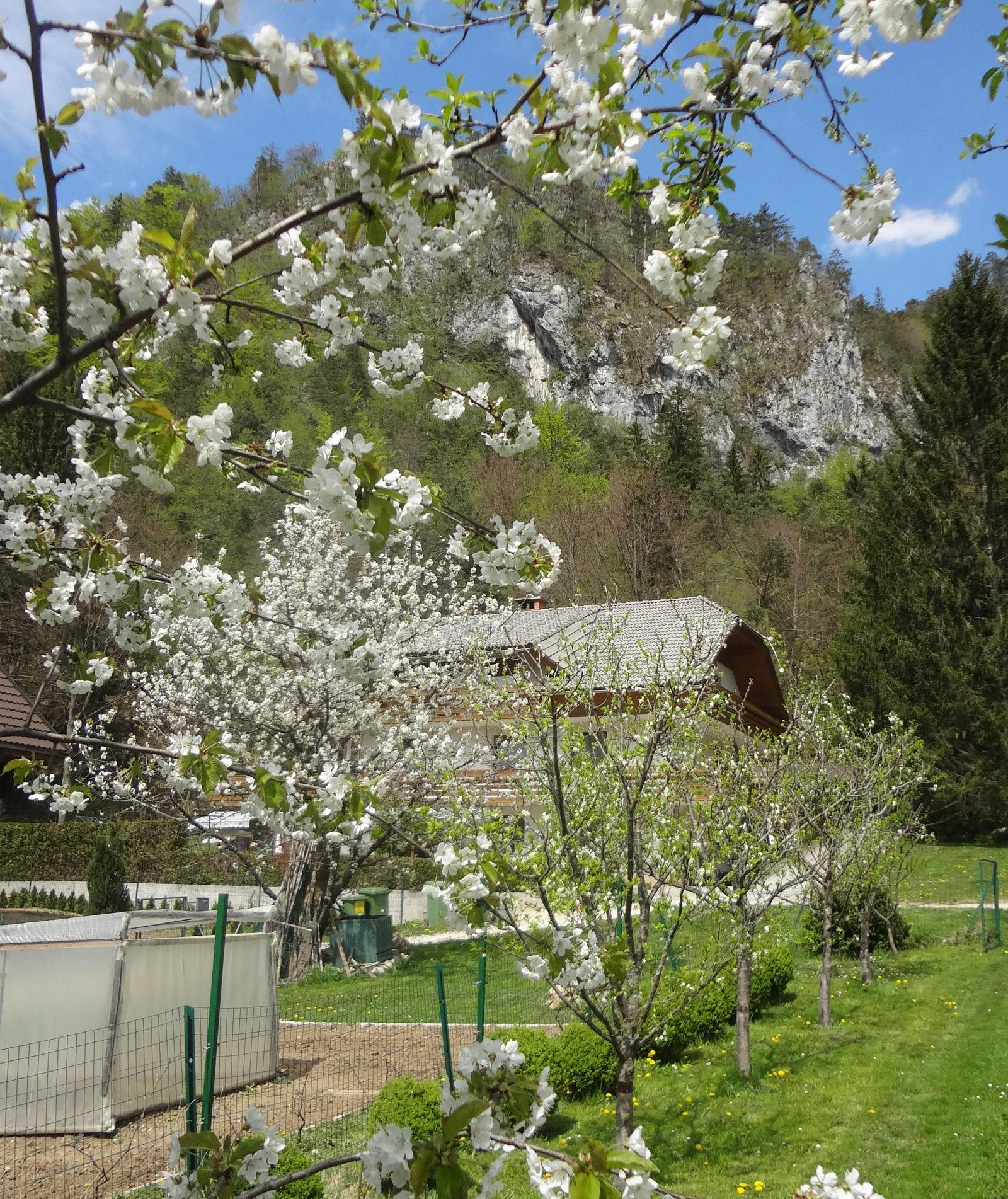 spring-slovenia-03