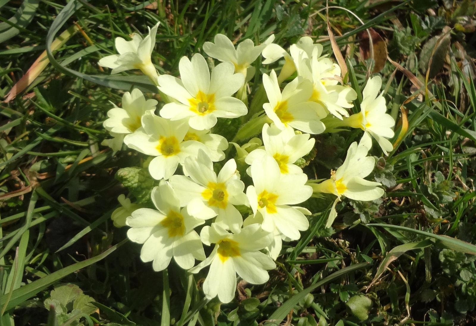 spring-slovenia-04
