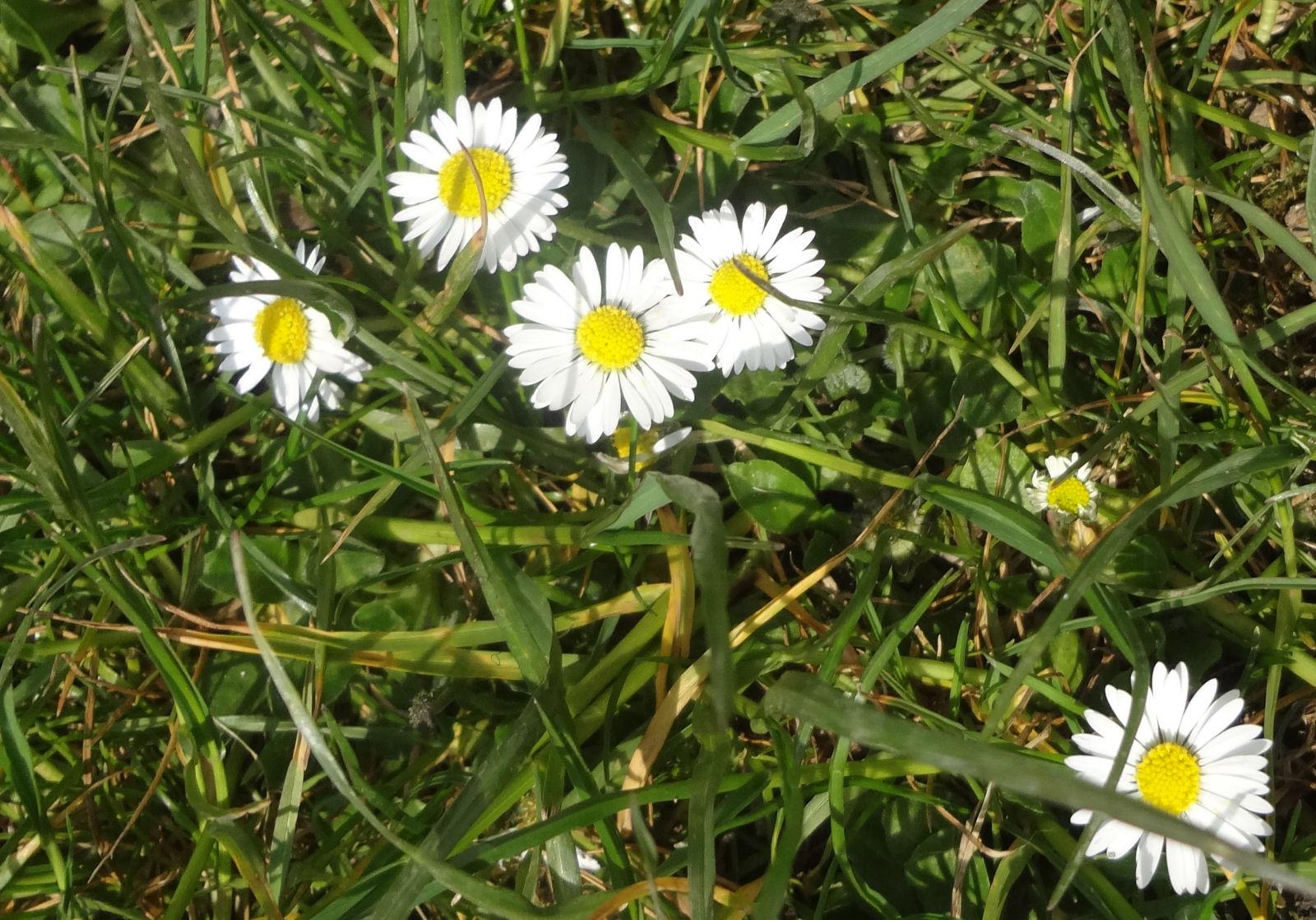 spring-slovenia-05