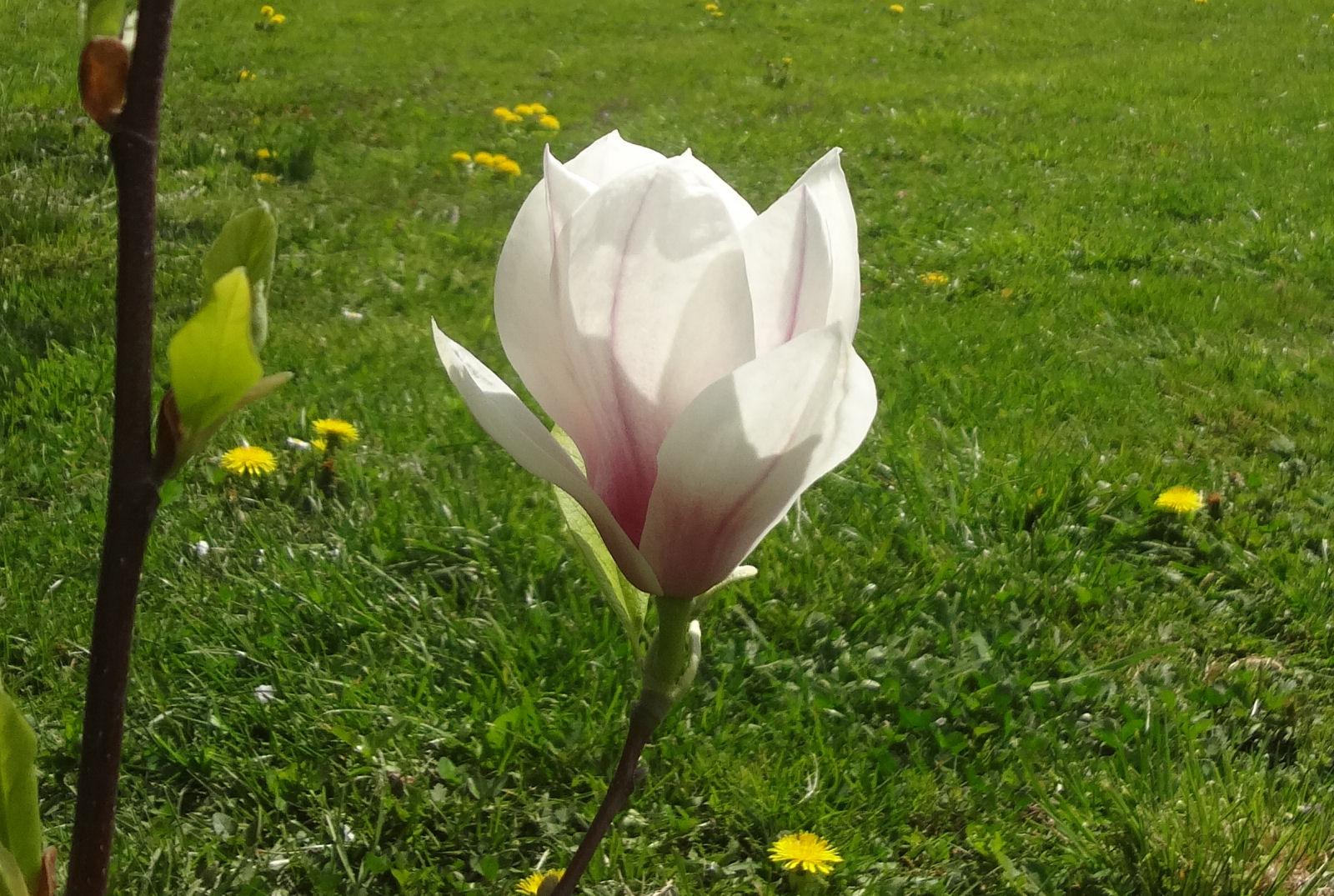 spring-slovenia-06