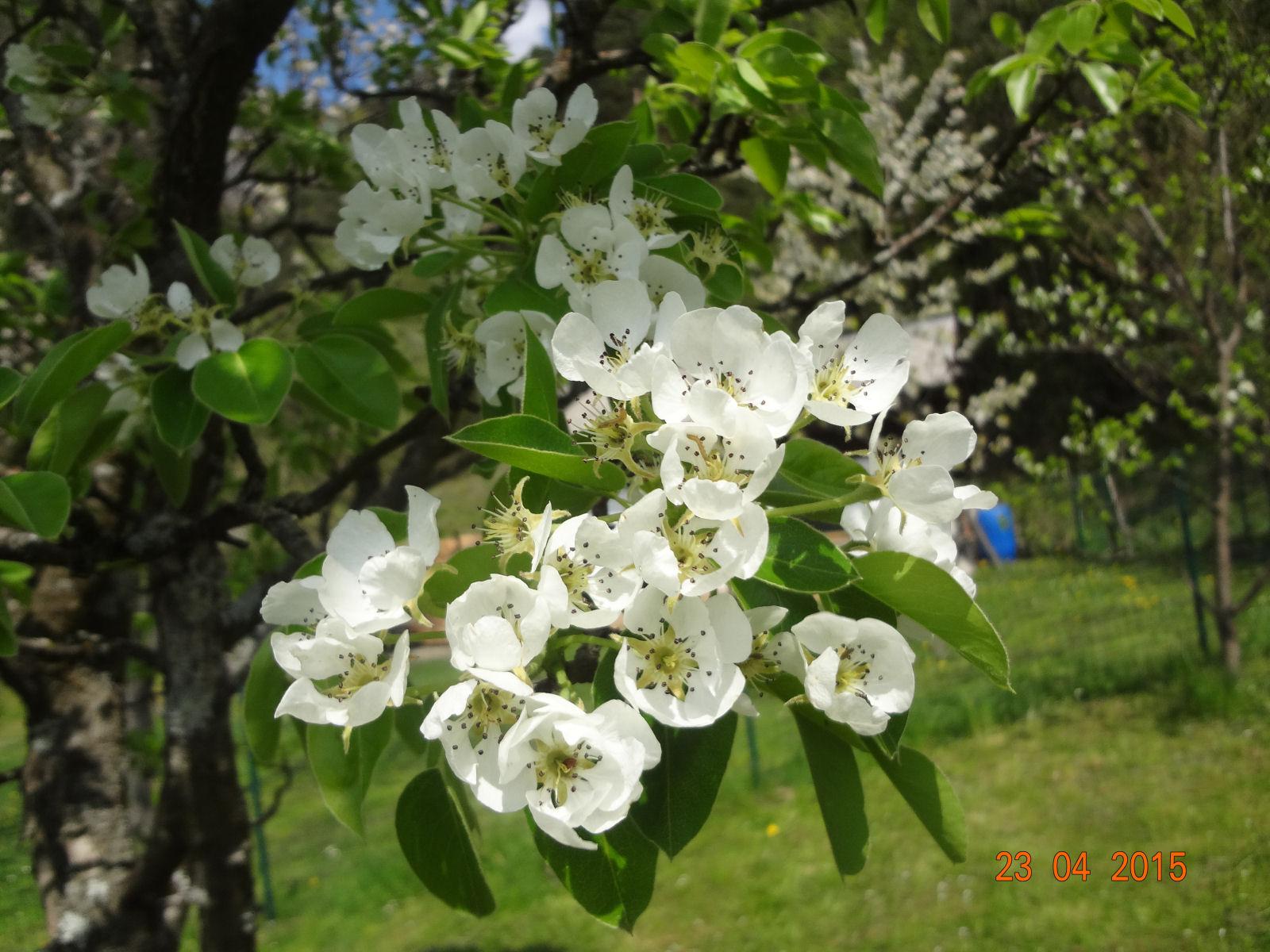 spring-slovenia-07