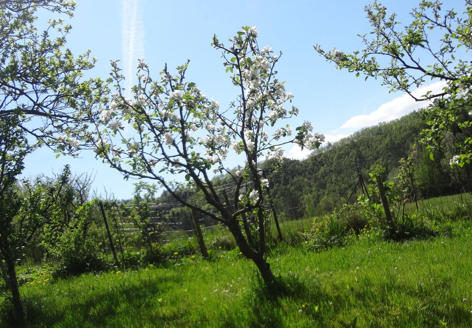 spring-slovenia-14