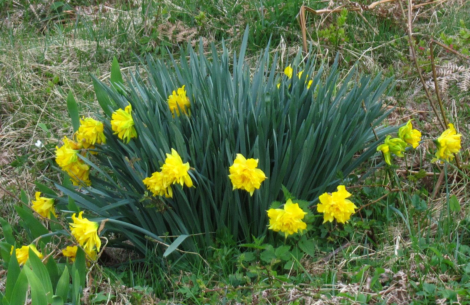 spring-slovenia-15