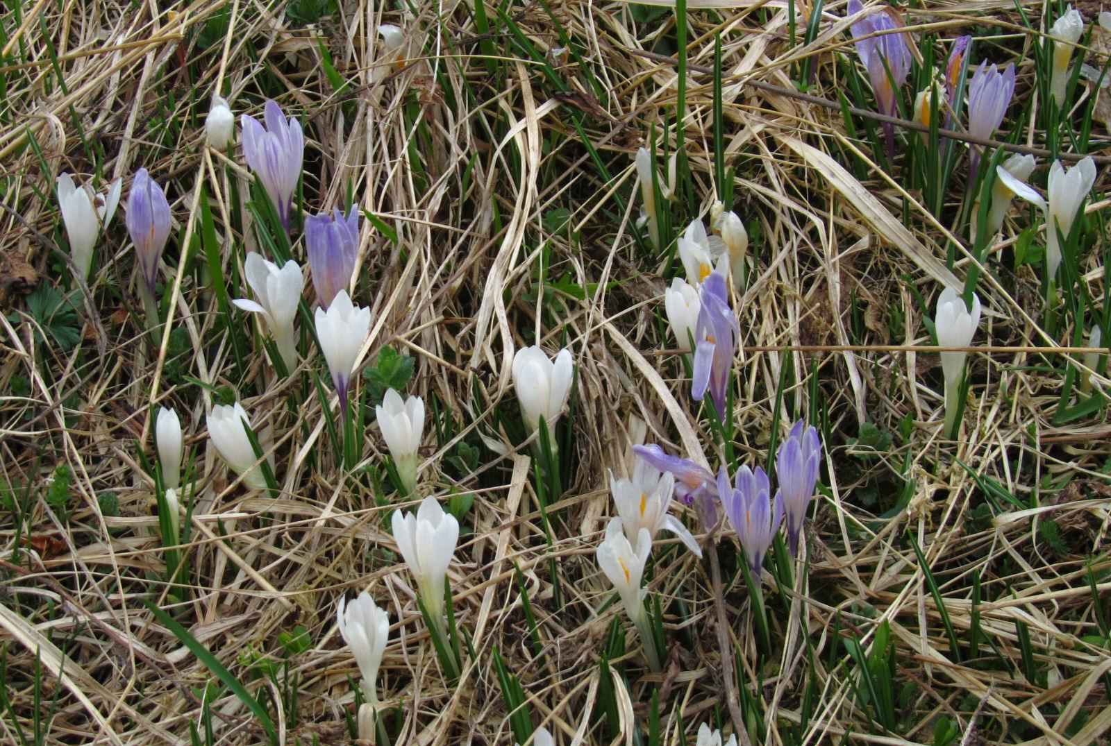 spring-slovenia-16