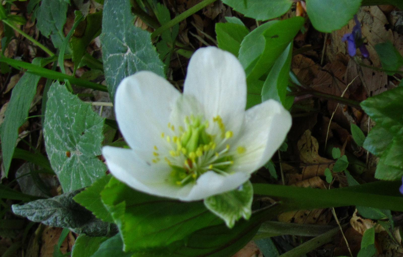 spring-slovenia-20