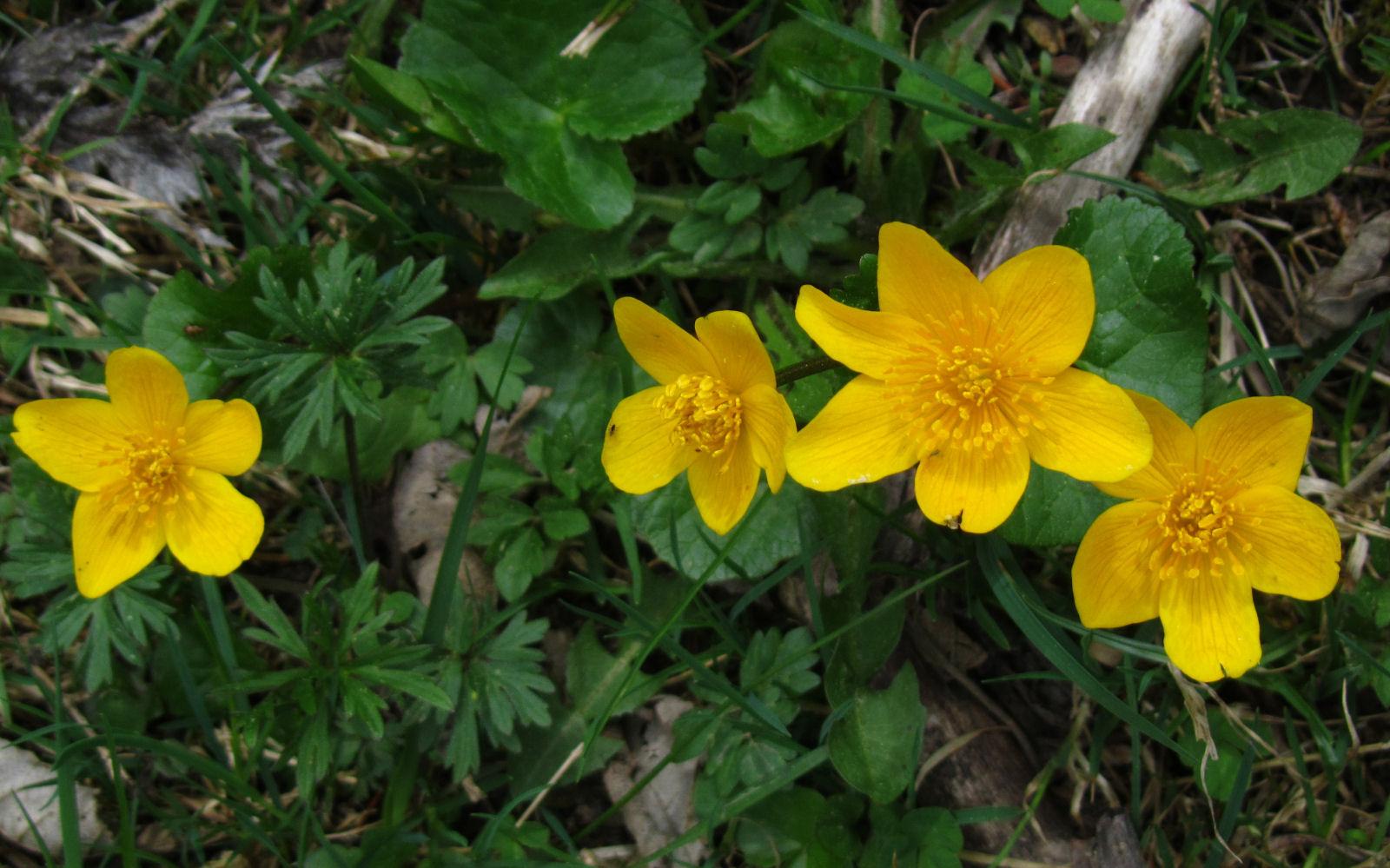 spring-slovenia-28