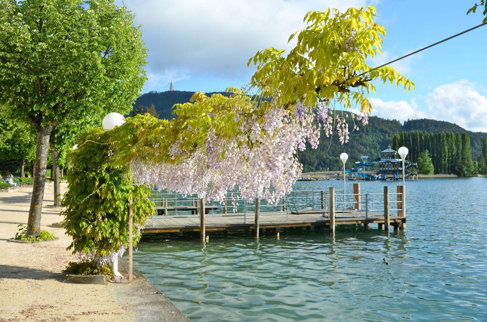 lake-woerthersee-wisteria-promenade-austria
