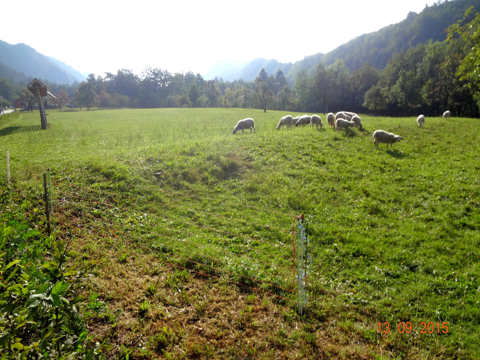 sheep-pasture-slovenia