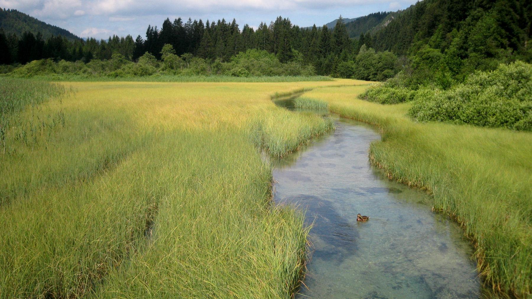 zelenci-nature-reserve-kranjska-gora