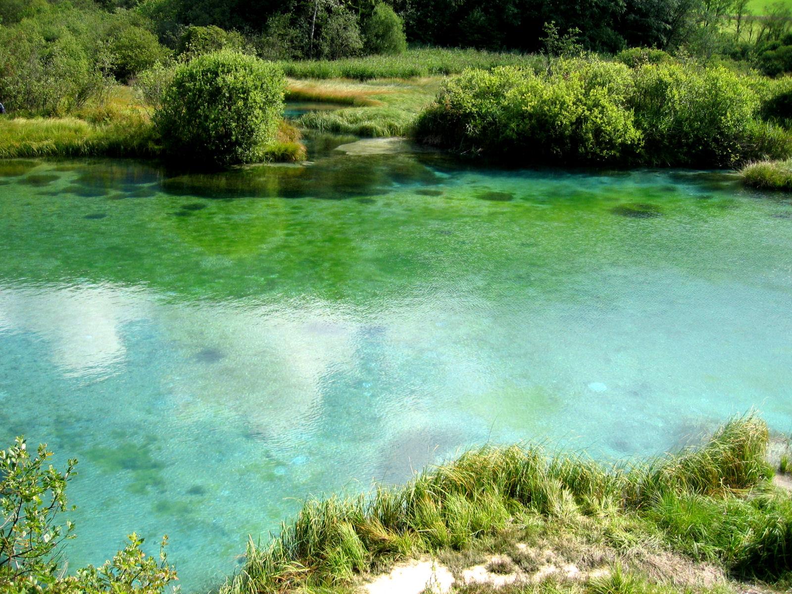zelenci-nature-reserve-sava-spring