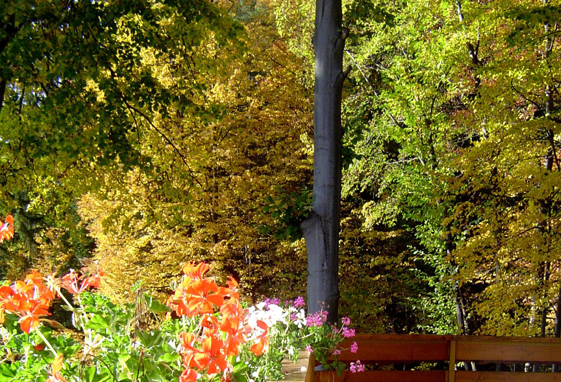 autumn-nature-slovenia-014