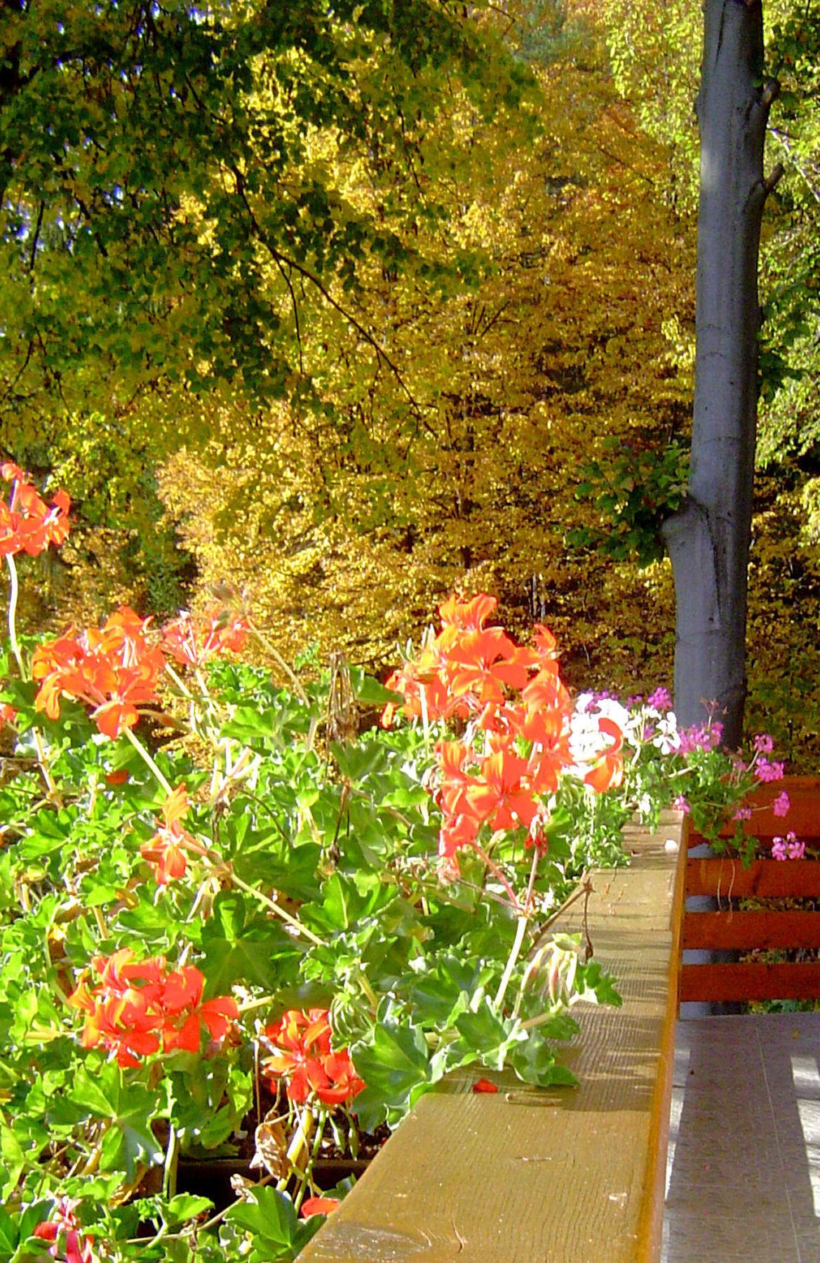 autumn-nature-slovenia-015-1