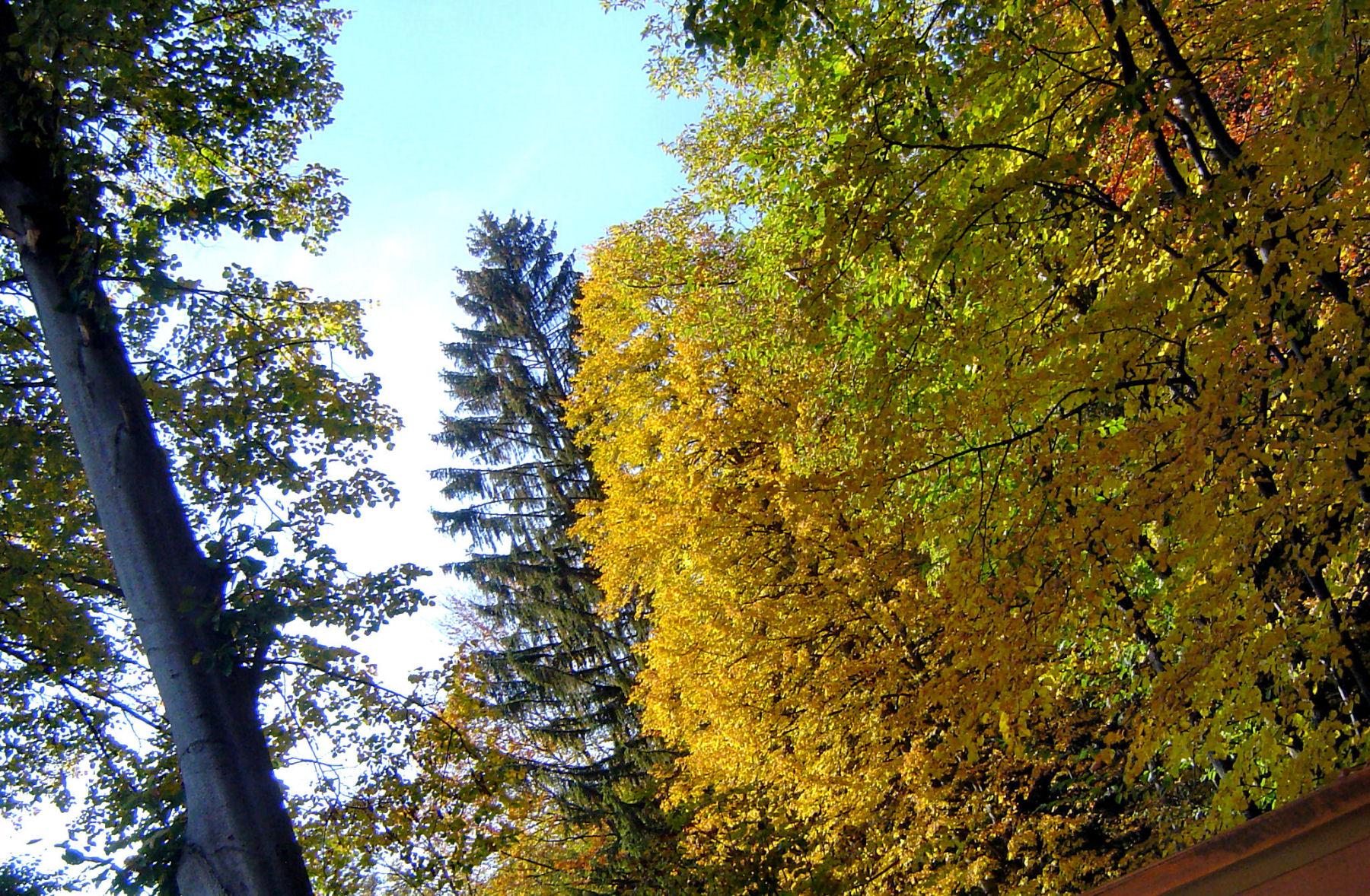 autumn-nature-slovenia-015-2