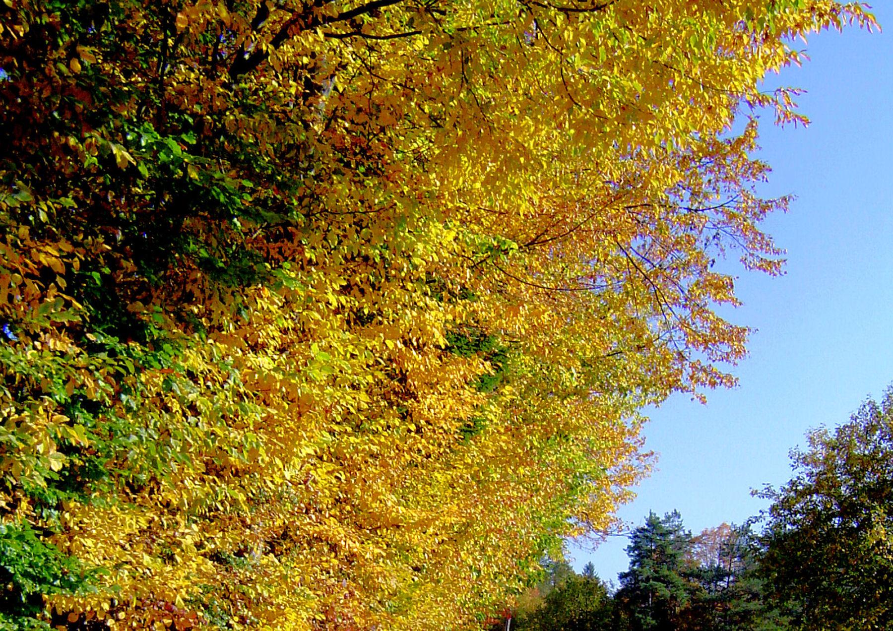 autumn-nature-slovenia-033