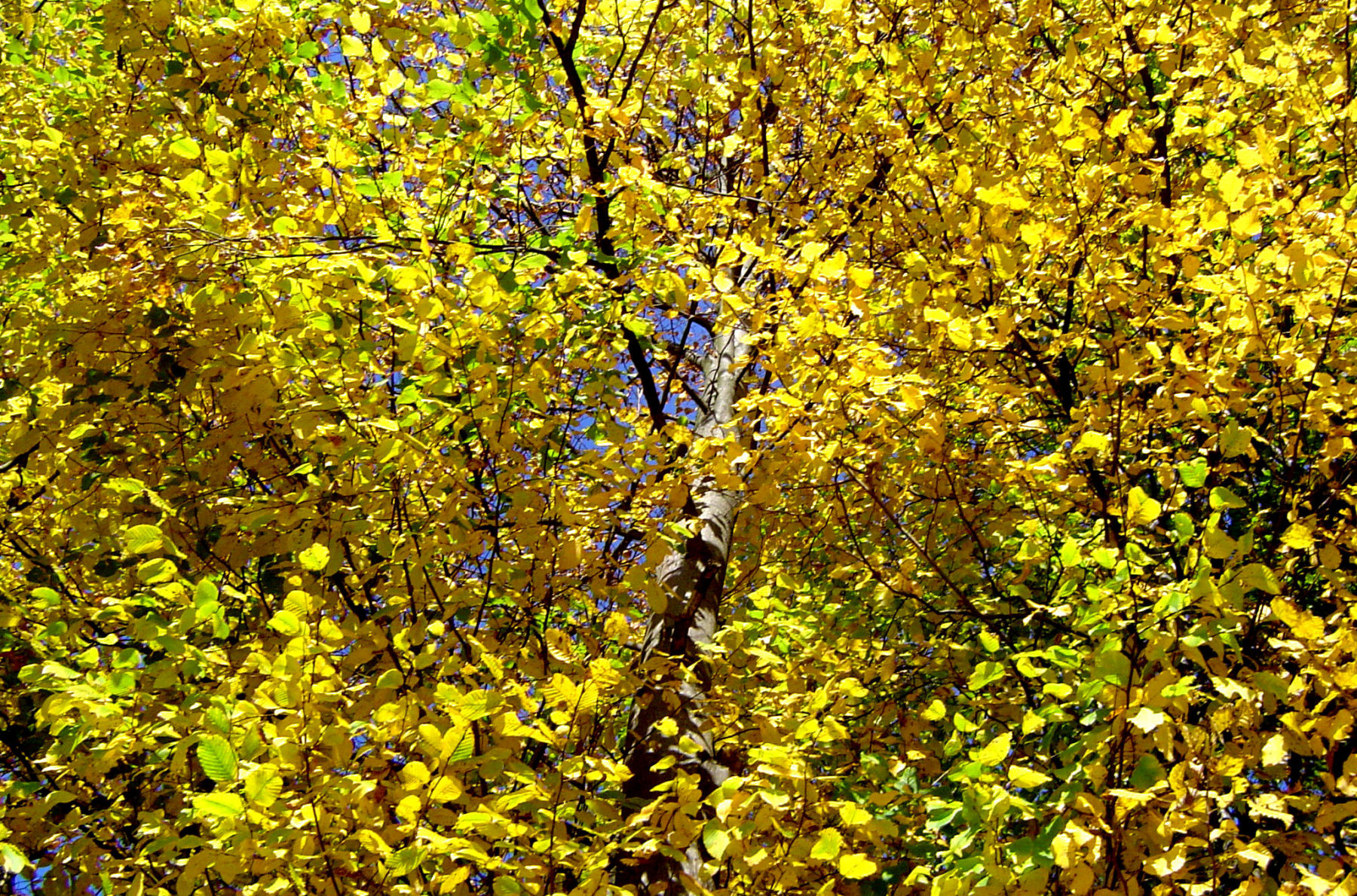 autumn-nature-slovenia-035