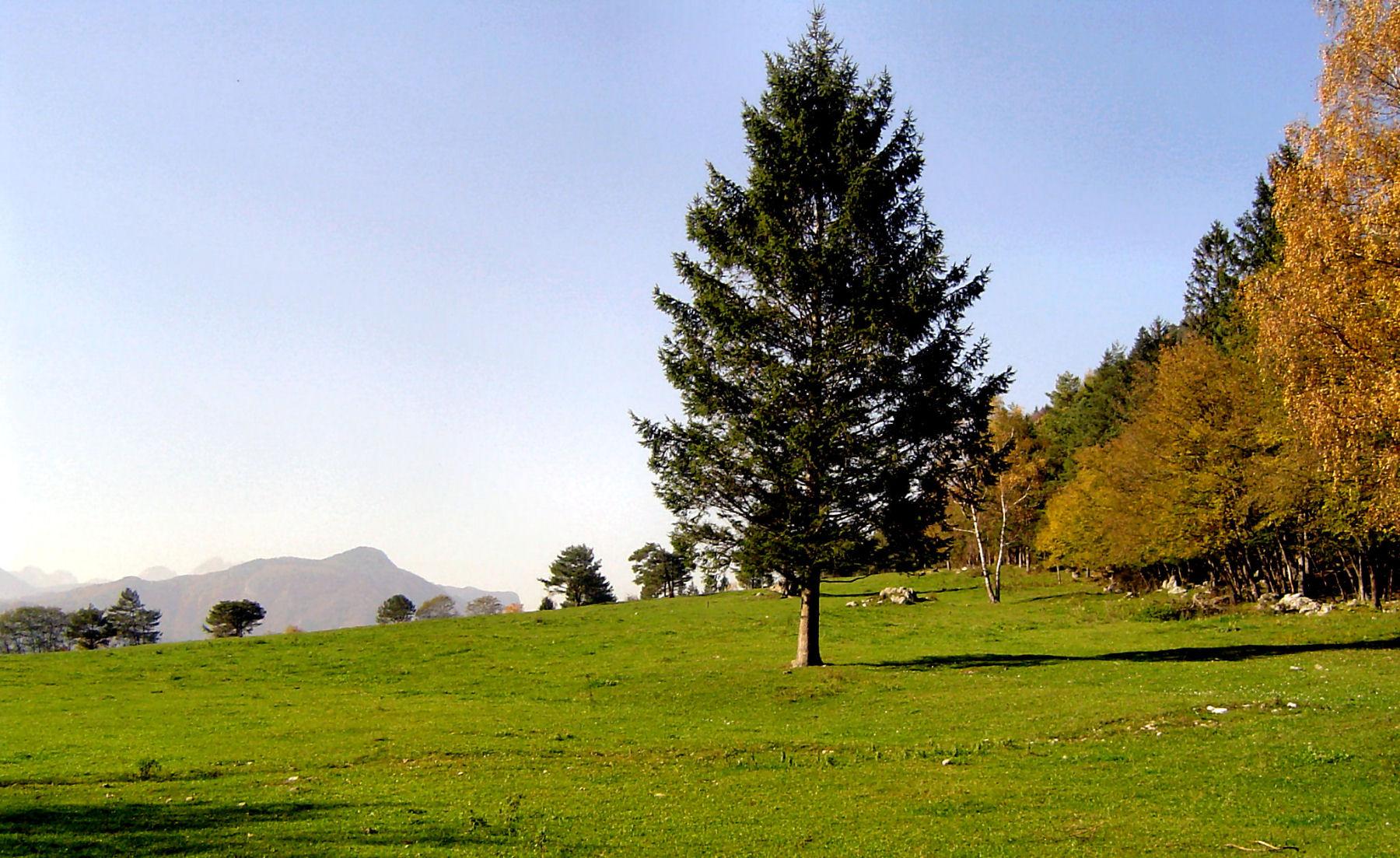 autumn-nature-slovenia-075