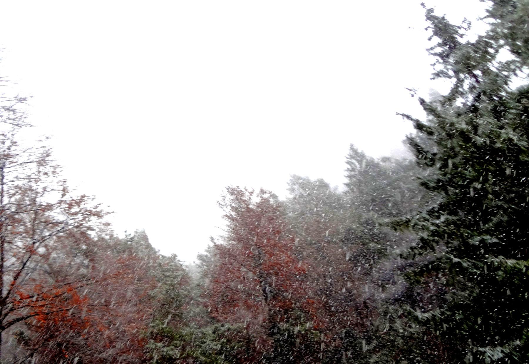 first-snow-november-2015-2