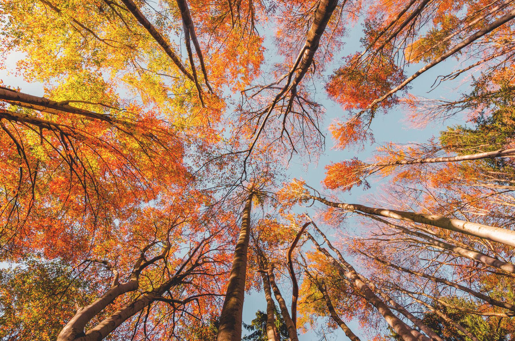 autumn-colors-slovenia
