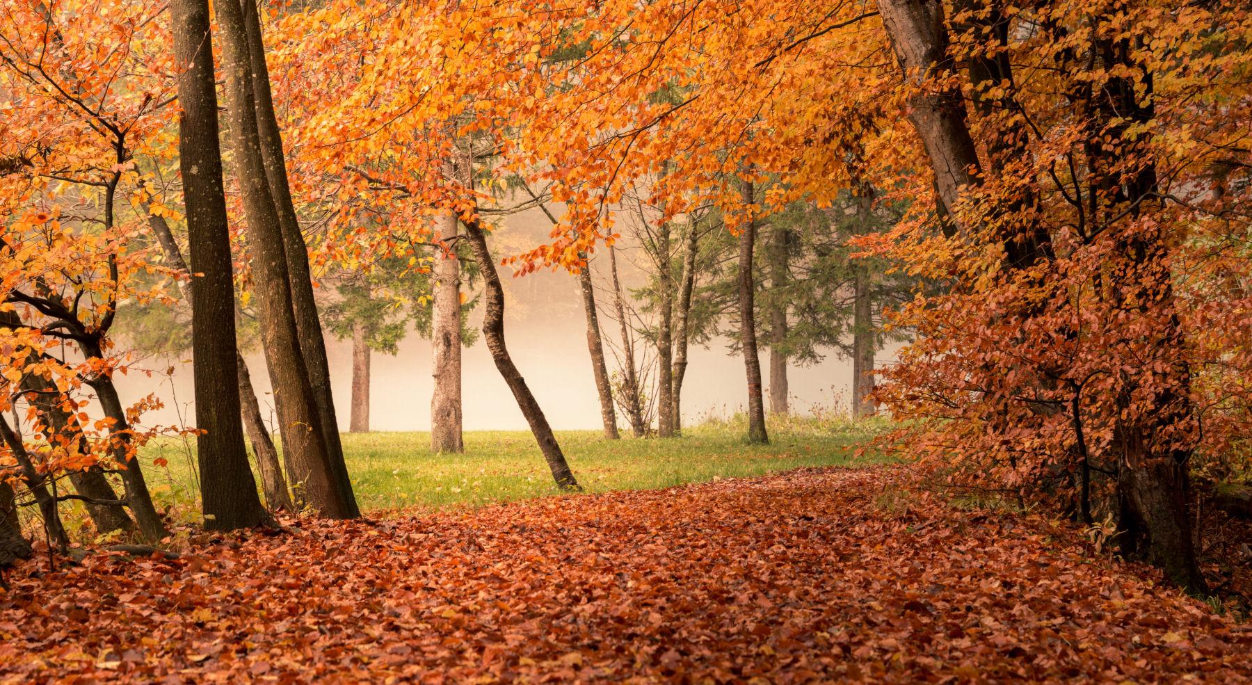 zavrsnica-valley-autumn-slovenia
