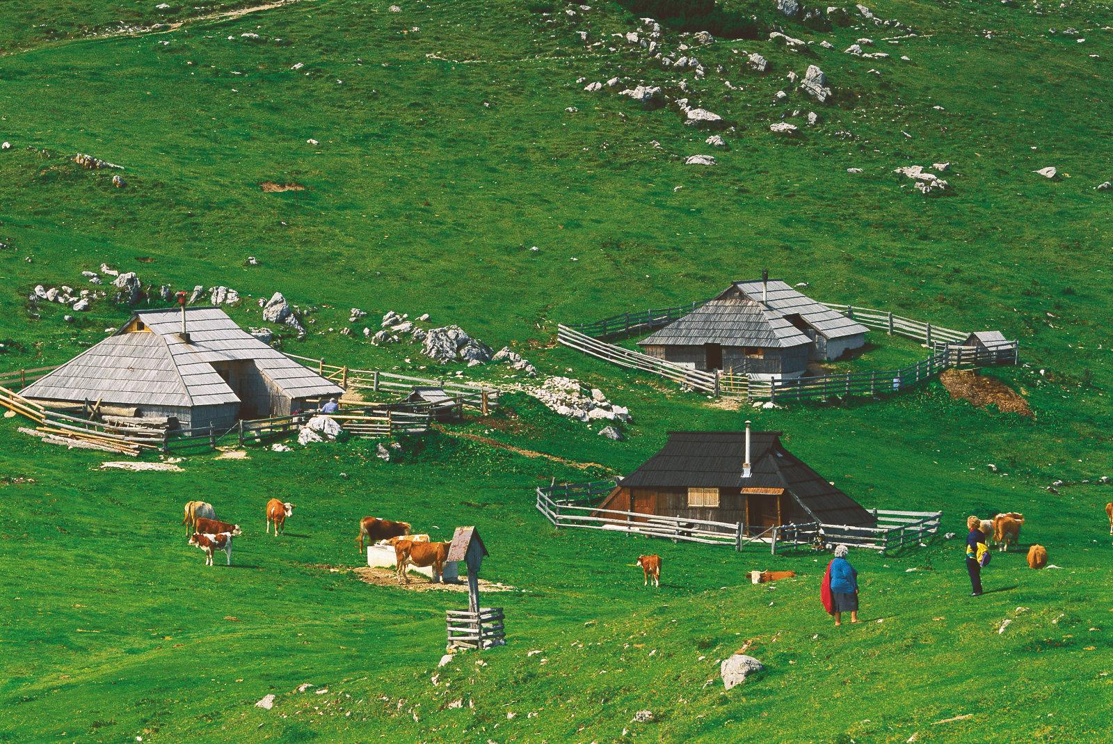velika-planina-cows-pasture