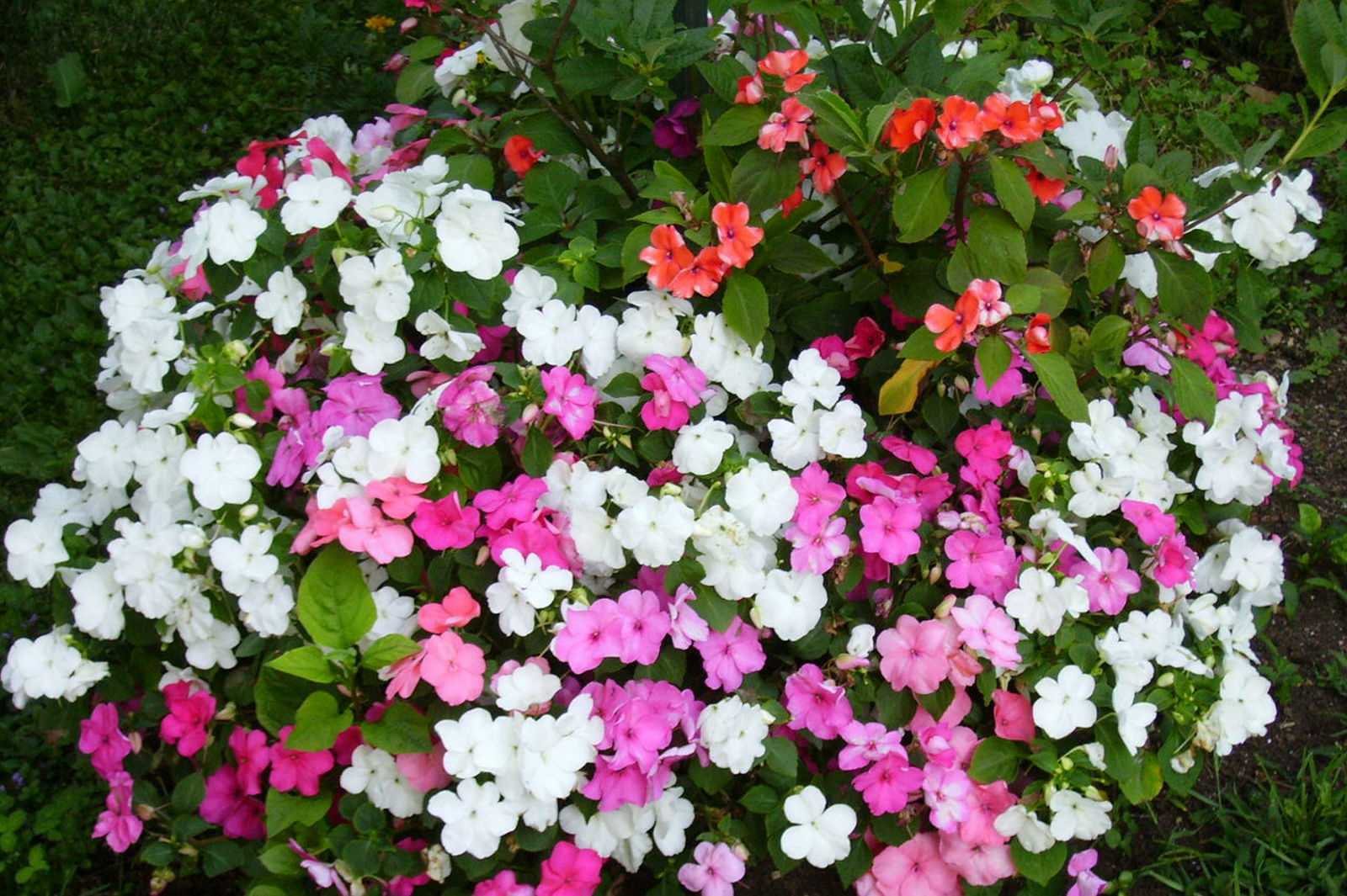 Some flowers outside of the Fine Stay apartment in Lake Bled, Slovenia